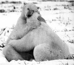 ¡Feliz San Valentin! Feliz día del Amor